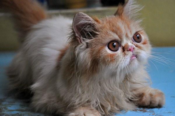 Продам котят кошку